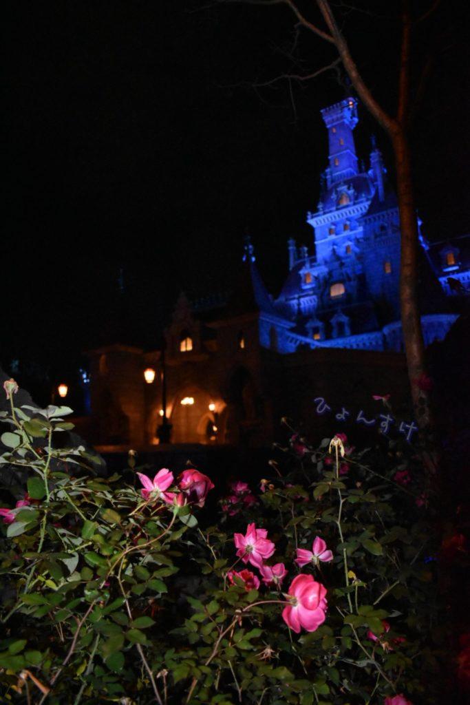 美女と野獣 バラ越しに撮れる野獣のお城